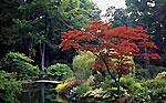 Courances jardin japonais