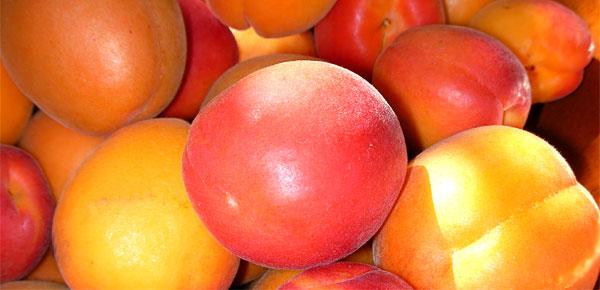 Le goût ensoleillé des abricots - Photo D.R.