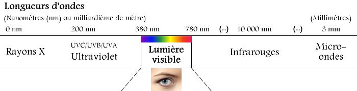 Les longueurs d'ondes des UV