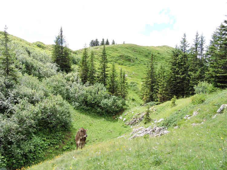 Randonnée dans le Vorarlberg au son des cloches des vaches © ABCfeminin.com.