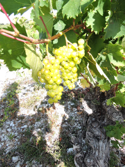 Le vignoble du Minervois. © ABCfeminin.com.