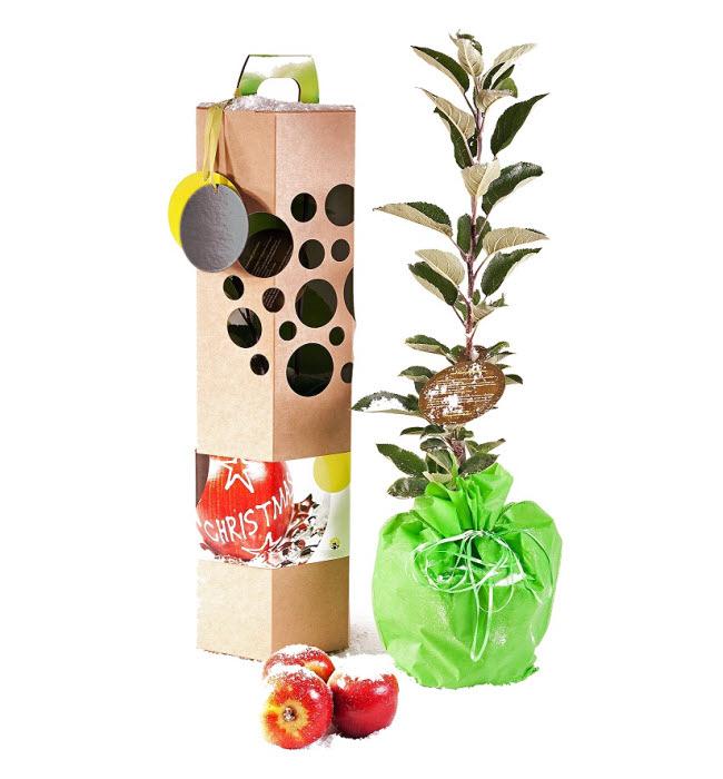 Cadeau thème NATURE - Un arbre à planter Arbre-Cadeau.