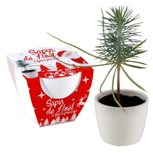Cadeau thème NATURE - Sapin à faire pousser Altermundi.