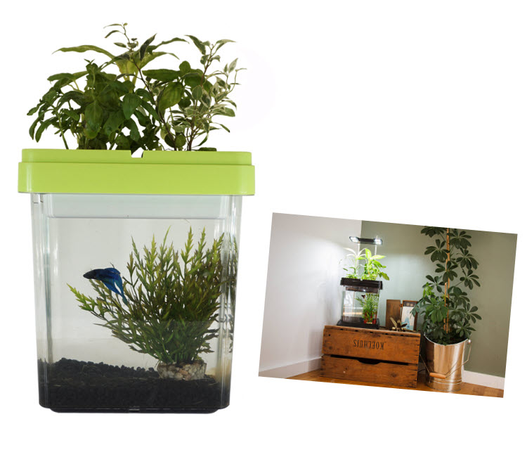 Cadeau thème NATURE - Aquarium Ozarium aquaponique CitizenFarm.