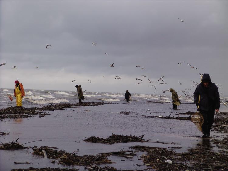 Pêcheurs d'ambre au bord de la mer Baltique