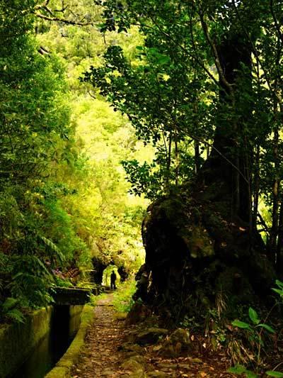 Levada de la forêt Laurel à Madère