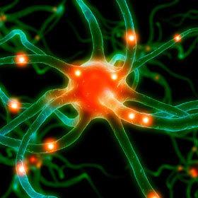 le TOP 10 des préférences du cerveau