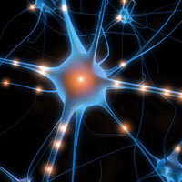 Neurone & synapses