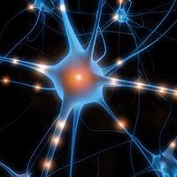 Neurone & synapses - meilleur carburant du cerveau