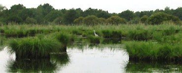 une aigrette dans le Parc Naturel régionale de Brière