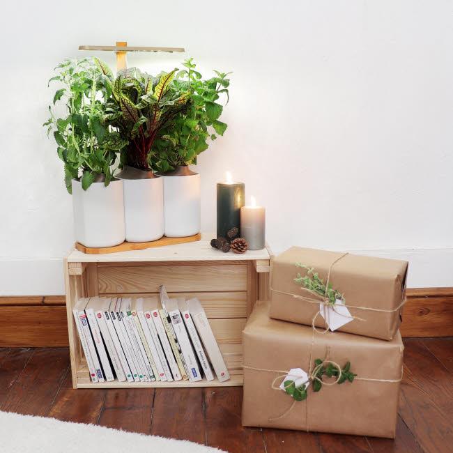 Potagers d'intérieur Lilo - Prêt-à-pousser.