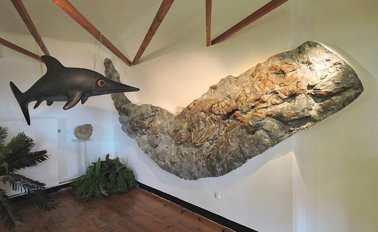 Photo : fossile d'ichthyosaure au Musée-Promenade de Dignes-les-Bains © ABCfeminin.com.