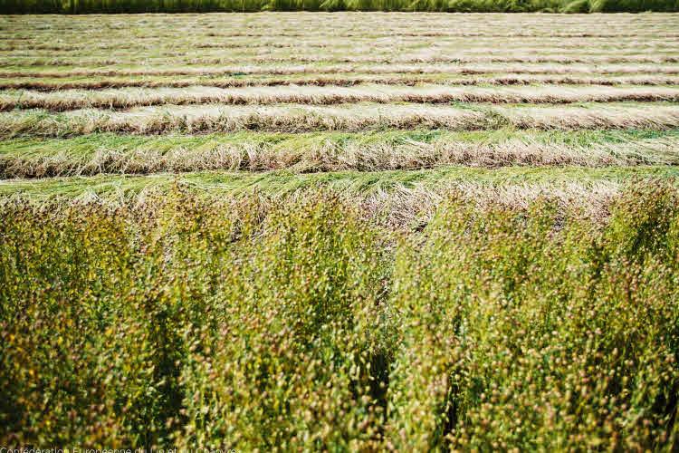 Rouissage du lin  © Confédération Européenne du Lin et du Chanvre.