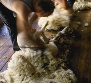 qu'est-ce que c'est que la laine cardée ?