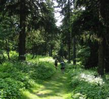 l'Euro Nordic Walk : le rendez-vous incontournable de la marche nordique